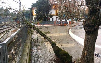 Una branca de grans dimensions cau a la avinguda Josep Maria Marcet