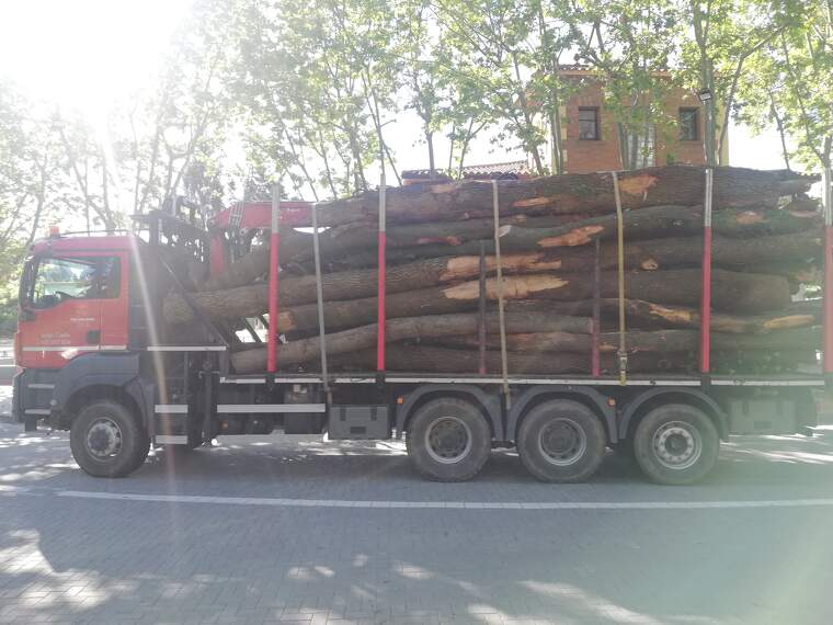 Camió portant els troncs dels arbres caiguts al seu pas per la plaça del Pi