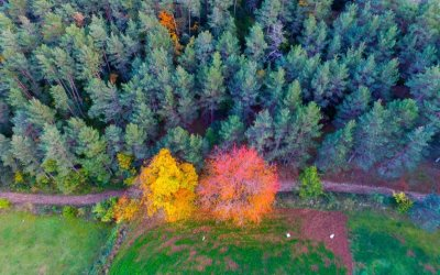 La UAB impulsa el primer concurs de fotografia de boscos fetes amb dron