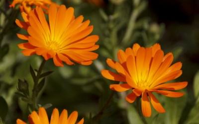 Baixada de les temperatures per donar la benvinguda a la primavera a Bellaterra
