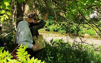 L'Agrupament Escolta Pau Casals posa en marxa una iniciativa per lluitar contra la vespa asiàtica