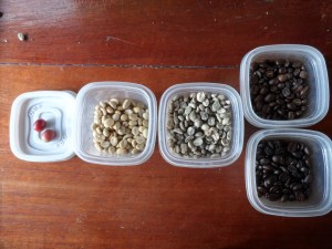 Bella Tica Coffee Beans Process