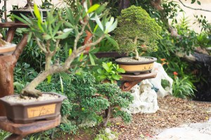 Inspirations for your garden by Bella Unica