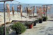 Las Rotas Dénia, comer en la Costa Blanca