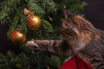 How to create a stress-free Christmas for pets