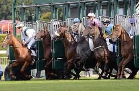 sortie-boite-course-chevaux