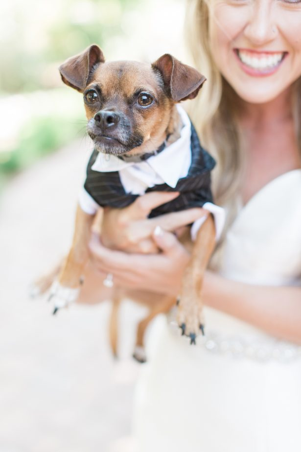 Wedding Dog - Photography: The Hendricks