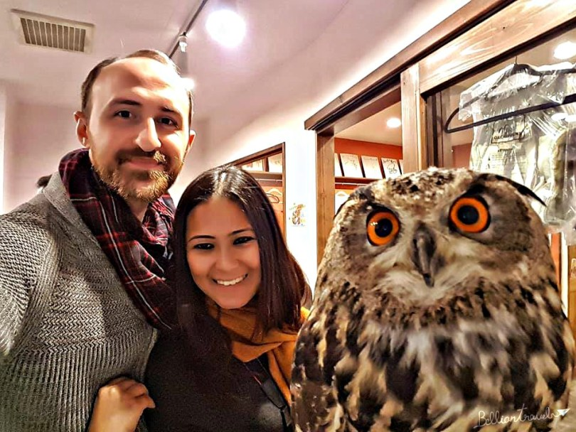 Owl(11)
