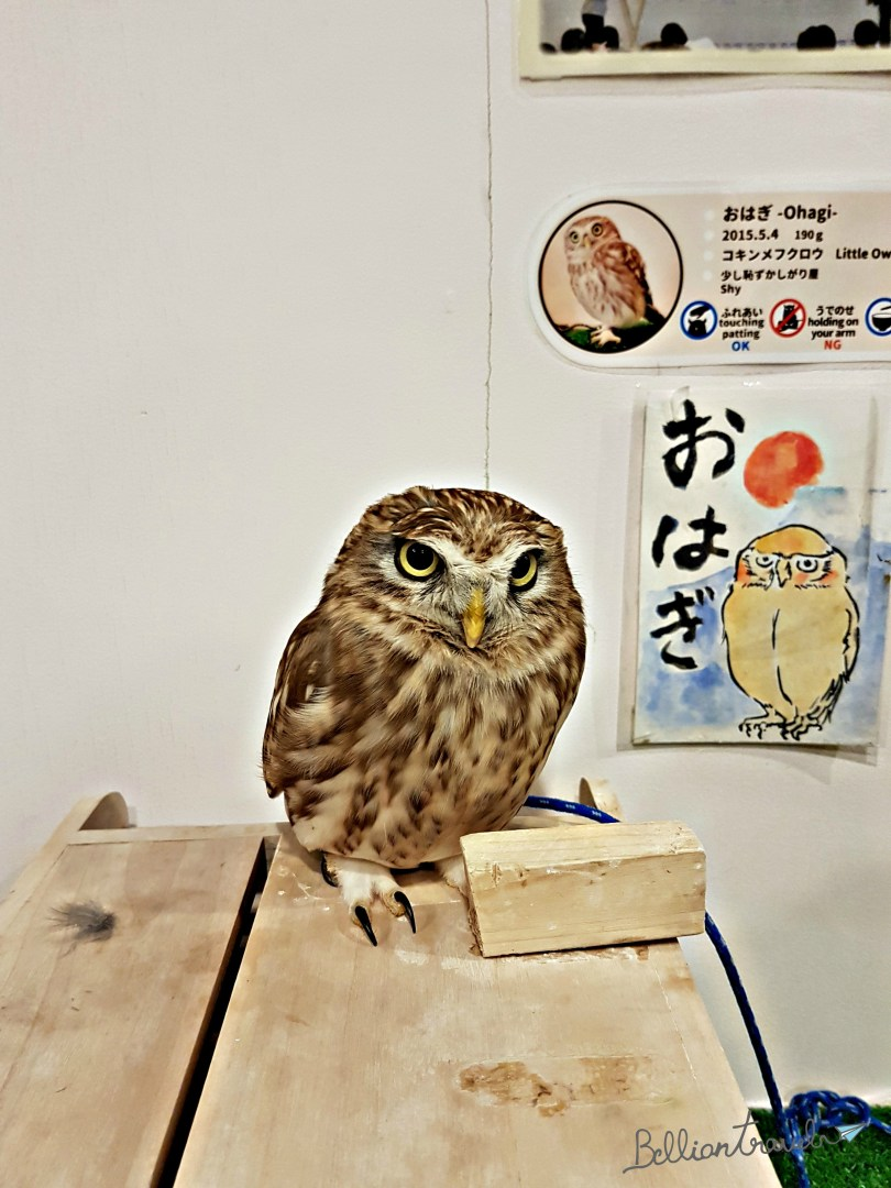 Owl(2)