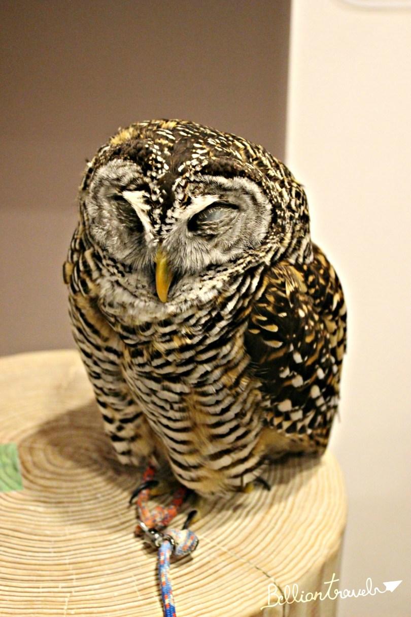 Owl(9)
