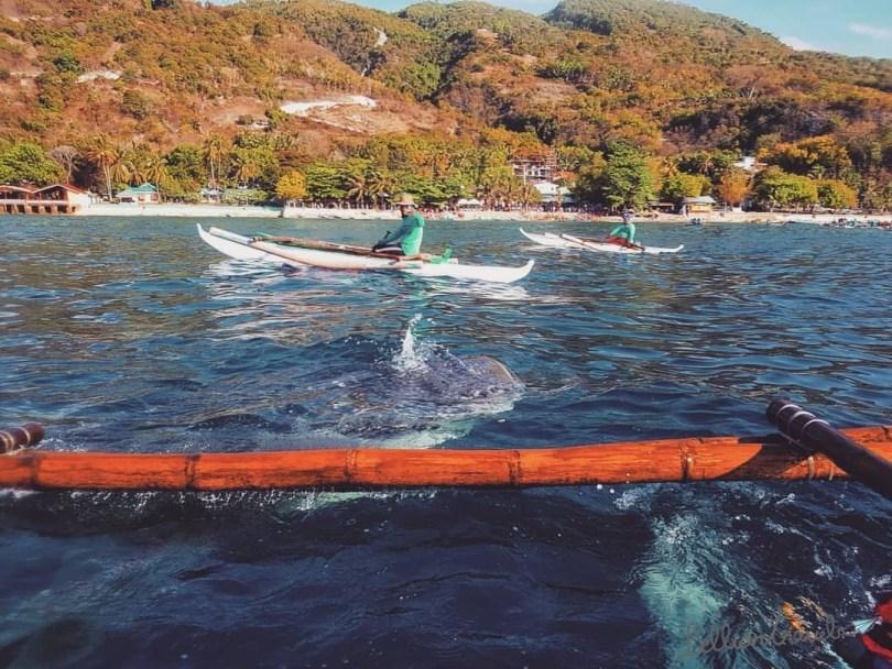 Whale Shark01.jpg