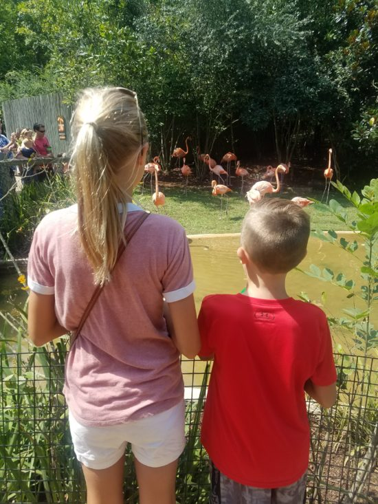 My Kids Had Fun At The Zoo Against Their Will