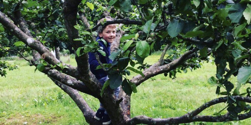Fun family camping | climbing an apple tree