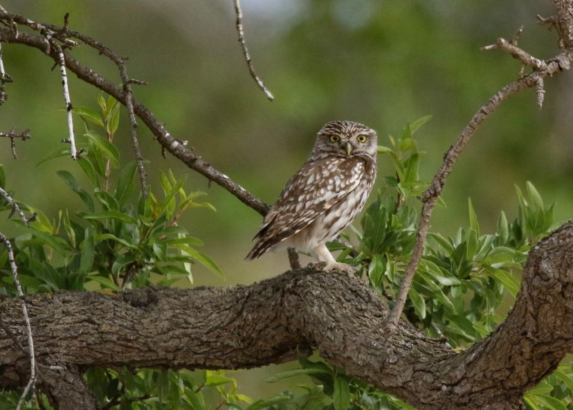 Owl sitting in a tree | Photo by Gunilla S-Granfalk on Unsplash