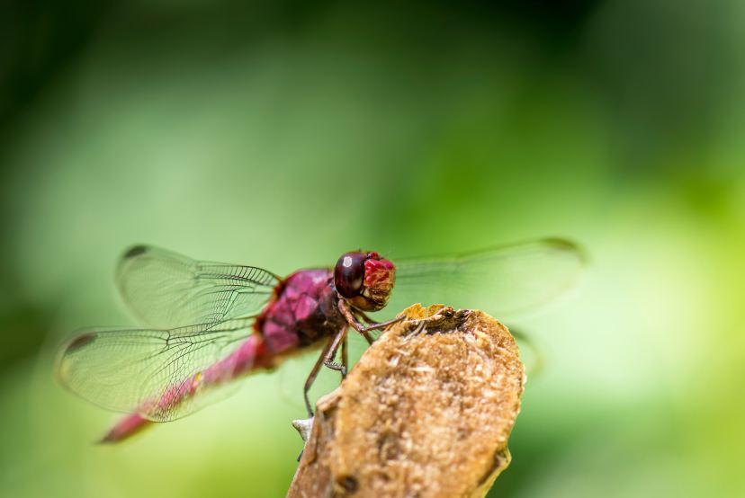 Dragonfly | Photo by Vincent van Zalinge on Unsplash