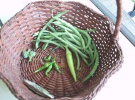 broccoli, beans, cayenne, banana pepper