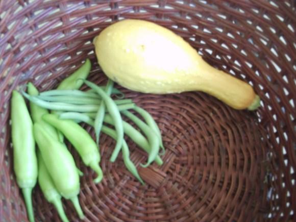 Sun. -- banana peppers, beans, squash