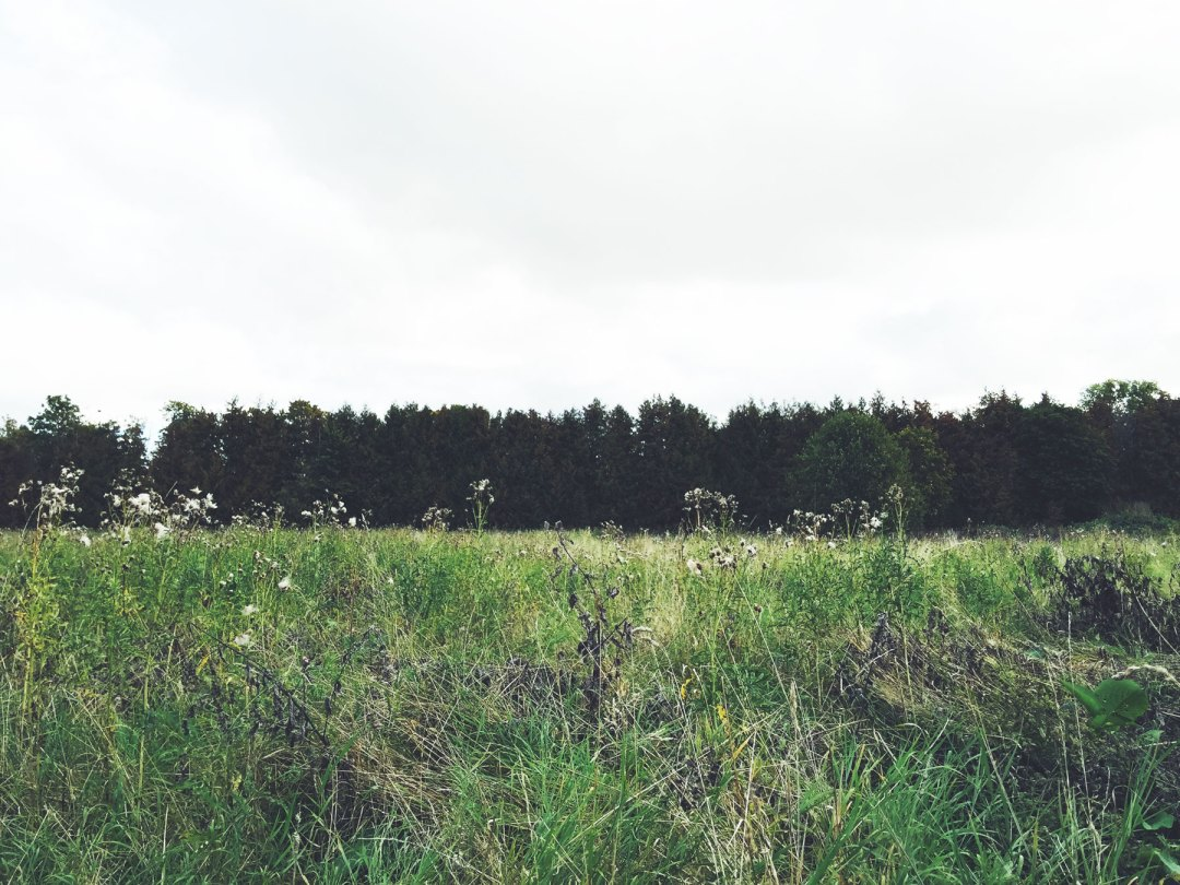 field-uppsala