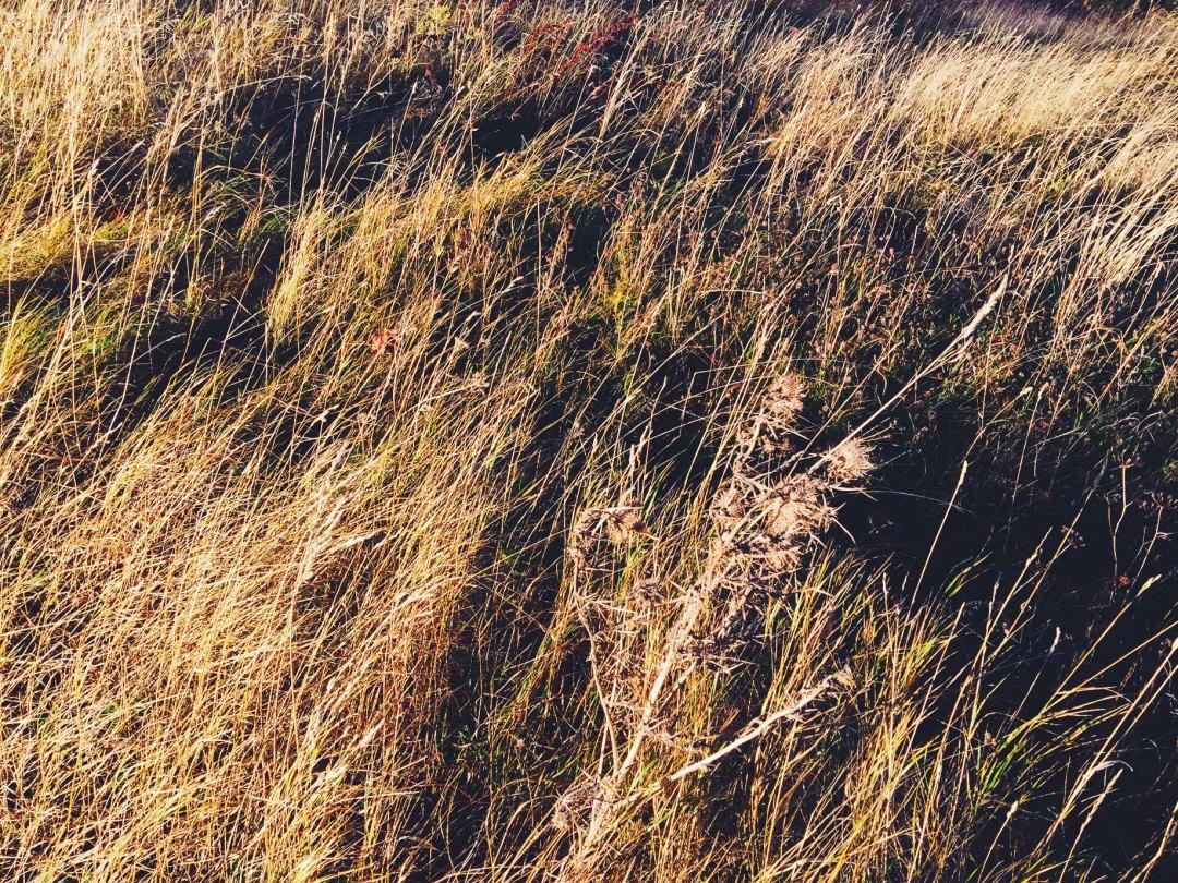 golden-field-autumn
