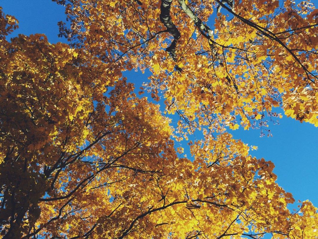 golden-leaves
