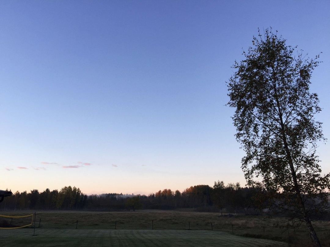 sunrise-tree-surahammar-life-coach