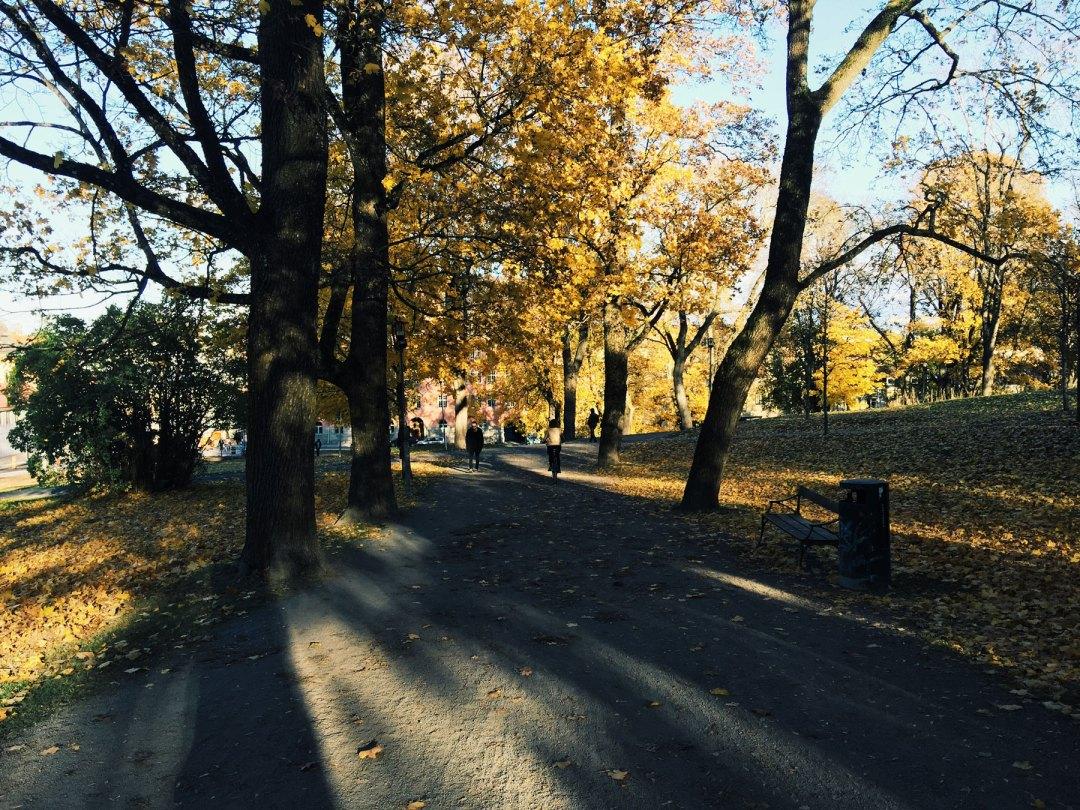 trees-shadows-autumn