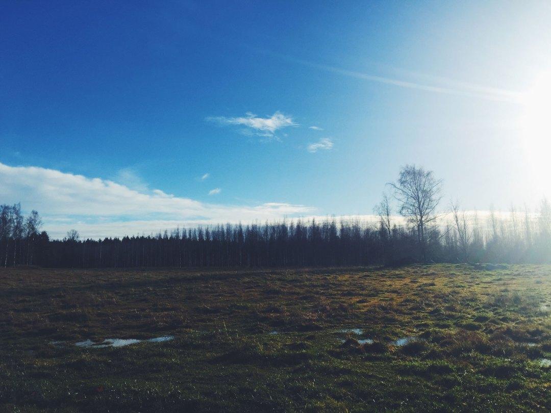 life-coach-field-trees