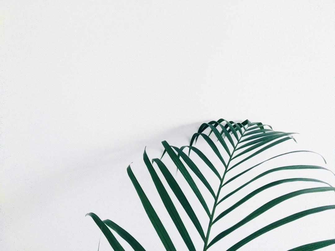 palm branch tree