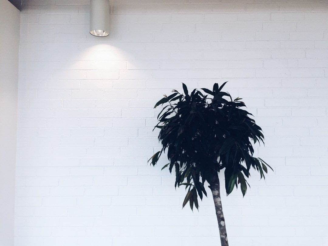 airport tree minimalism