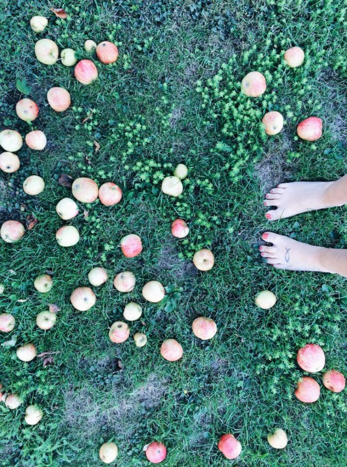 apples backyard home