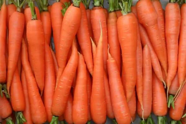 avc-cenouras-1 Dermatologista revela os alimentos que ajudam na proteção contra o sol