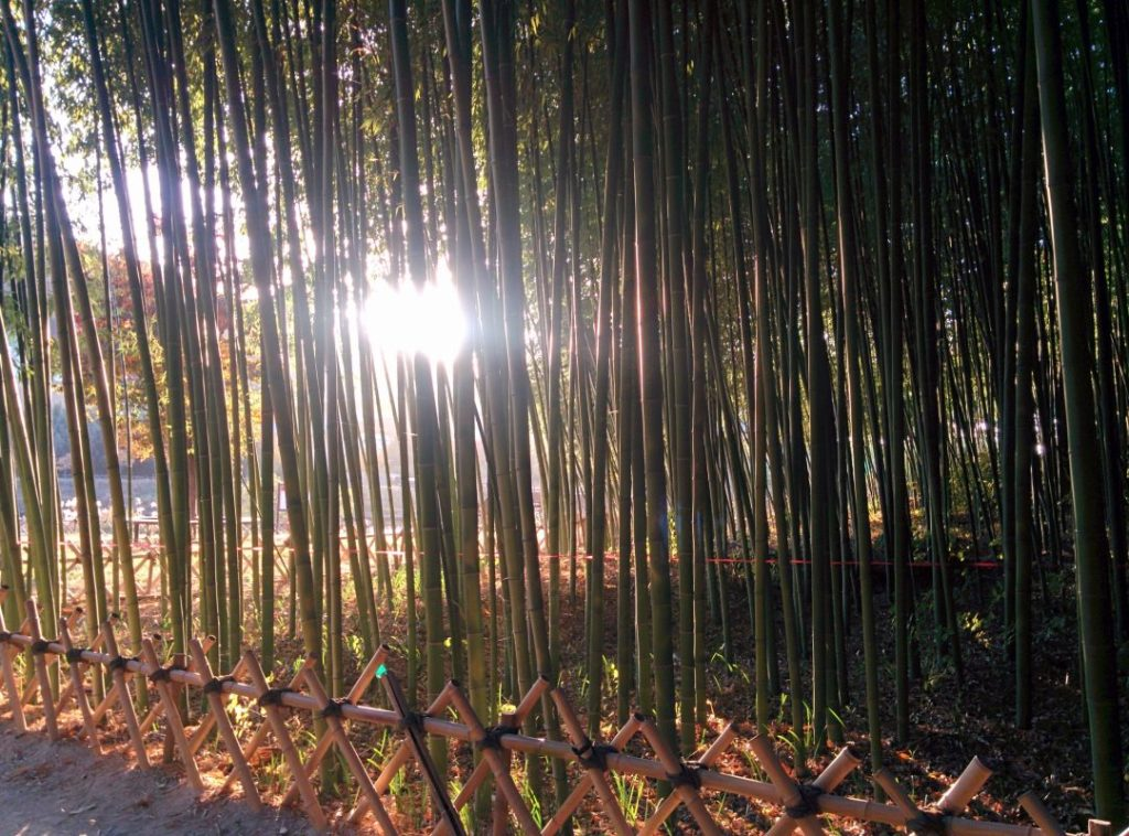 Taehwa River Bamboo Forest Ulsan