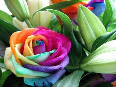 As Plantas com Flor