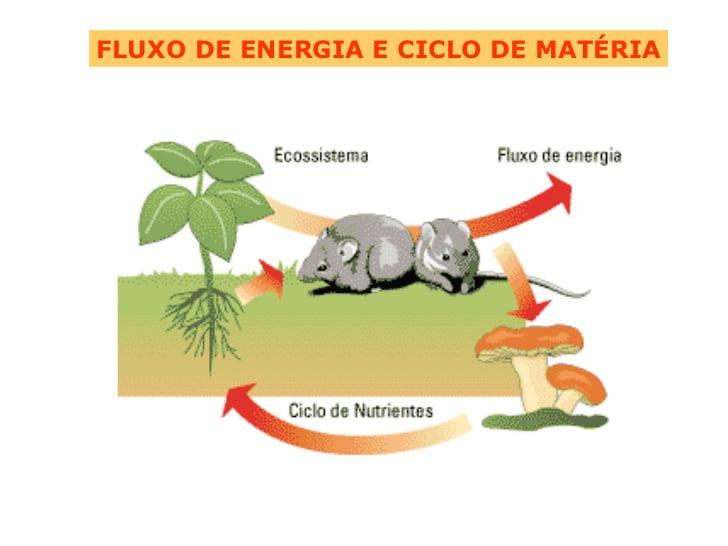 Fluxo de energia e ciclo da matéria