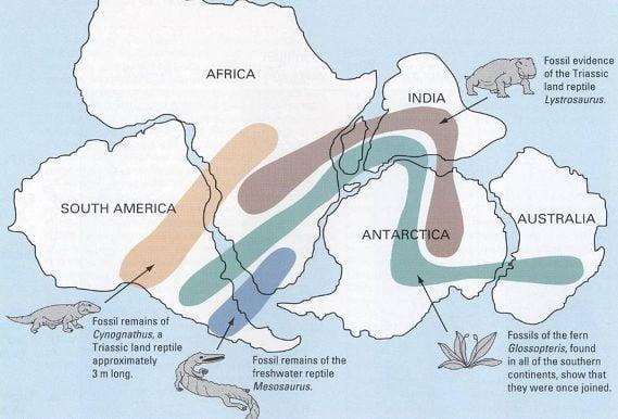 Deriva dos Continentes e Tectónica de Placas