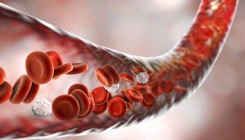 A Importância do Sangue