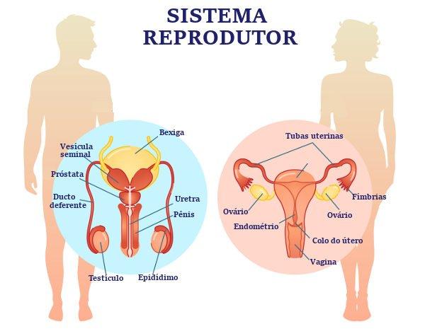 Teste Diagnóstico – O Sistema Reprodutor (1)