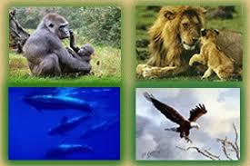 Animais e os ambientes naturais