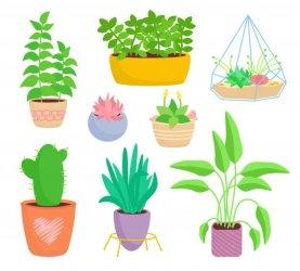 Plantas-espontâneas-terrestres-e-aéreas.jpg