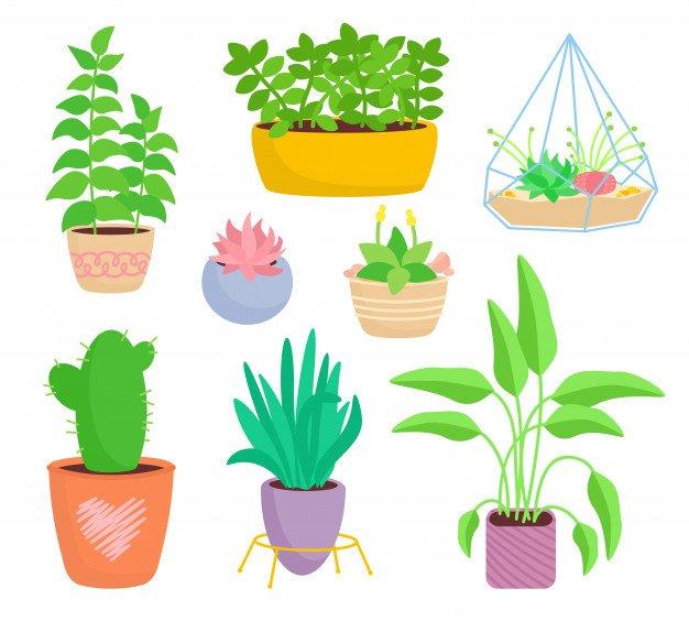 Ficha de Trabalho – Plantas espontâneas, terrestres e aéreas (1)
