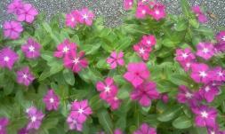 bloomwhereyoureplanted
