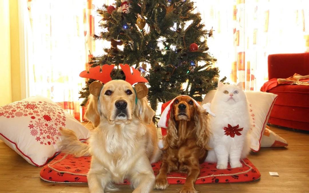 Ideas y música para cenas de Navidad divertidas