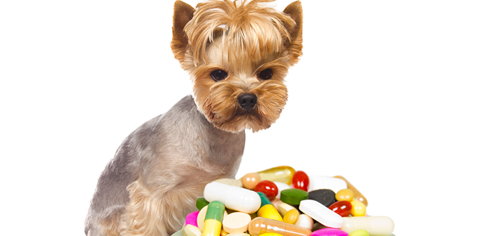 Can You Give A Dog Benadryl Thats On Other Medication