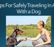7-tips-for-traveling-safely-with-a-dog