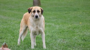 liquid benadryl for dogs