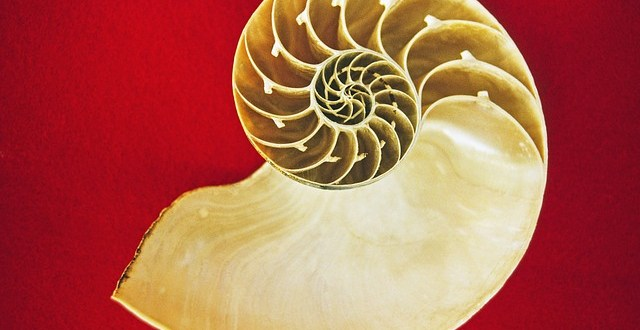 Fibonacci en la natualeza y la proporción áurea