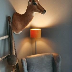 Opgezette impala met sierlijke hoorn