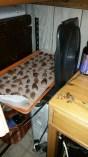 Drying Morels