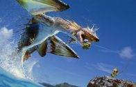 Benchmark Monster Hunter online, prueba de rendimiento