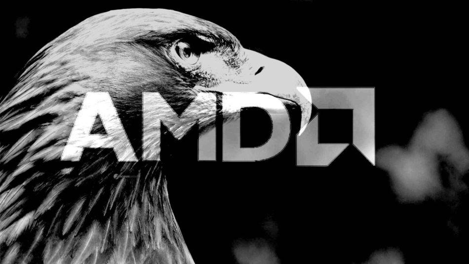 AMD Gray Hawk llegará en 2019